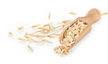 Oat flakes in scoop and oat ears Royalty Free Stock Photo
