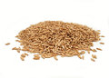 Oat grains heap of raw and dry on white background Stock Image