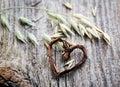 Oat seeds Stock Photo