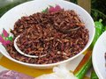 Oaxacan grasshoppers chapulines or constitute a vital source of protein in mexican cuisine from the oaxaca region Royalty Free Stock Photo