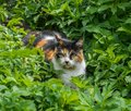 Observant, charming cat lying in the grass in the garden