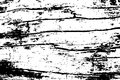 Obsolete cracked wood texture. Lumber board monochrome texture.