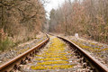 Obsolete railroad tracks railway line passing through the autumn forest Stock Images