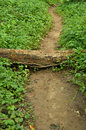 Obstacle on a path wood as an through the forest Royalty Free Stock Photography