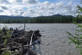 Obstruction of logs on the river suntar water summer landscape surrounding in highlands oymyakon yakutia russia Stock Images