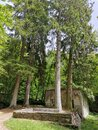 Occitanie Aude ruined forest house among old trees Royalty Free Stock Photo