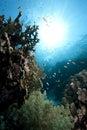 Ocean, Coral And Fish