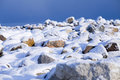 Ocean freezing to ice during cold winter gn snow covered stones with that in the background Royalty Free Stock Photo