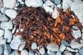 Ocean Plant Life Rock Weed Seaweed Beach Rocks