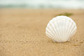 Ocean shell on the beach close up with copy space Royalty Free Stock Images