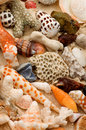 Ocean shells conch shells corals pieces and pebbles closeup as background Royalty Free Stock Photography