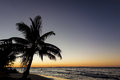 Ocean sunset tropical sunrise with water beach and sky and silhouetted palm tree Stock Photos