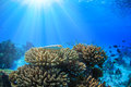An ocean underwater reef with sun light through water surface Royalty Free Stock Photo