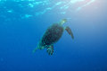 An ocean underwater reef with sun light through water surface an