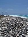 Ocean wild side beach Royalty Free Stock Photo