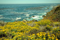 Ocean wildflowers hilly california coastal terrain with overlooking Royalty Free Stock Image