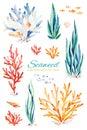 Oceanic seaweed watercolor set Royalty Free Stock Photo