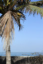 Oceanside coconut tree on the photo taken in senegal Stock Photos