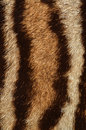 Ocelot fur background closeup of texture Royalty Free Stock Photography