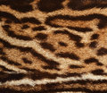 Ocelot fur closeup of spotted coat Royalty Free Stock Photo