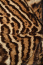 Ocelot fur texture closeup of details Royalty Free Stock Photos