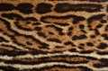 Ocelot fur texture closeup of spotted coat Stock Photography
