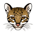 Ocelot an ink illustration of an s face Royalty Free Stock Photo