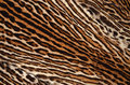 Ocelot skin pattern of background Stock Photography
