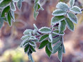 October Morning Frost Royalty Free Stock Photography