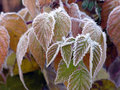 October Morning Frost Royalty Free Stock Photo