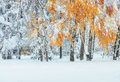 October mountain beech forest with first winter snow. Carpathian Royalty Free Stock Photo