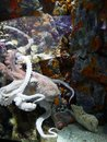 Picture : Octopus at the Gosier aquarium in Guadeloupe head