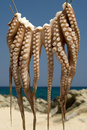 Octopus hanging to dry Royalty Free Stock Photo