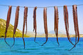 Octopus hanging to dry Royalty Free Stock Photography