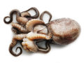 Octopus on white background small isolated Stock Images