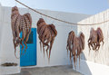 Octopuses drying in the sun in a Greek island Stock Image