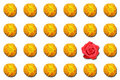 Odd-one-out Red rose Royalty Free Stock Photo
