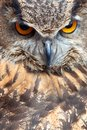 Oeil de hibou Photos stock