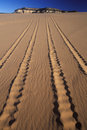 Off road vehicle tracks in sand coral pink sand dunes state park utah Royalty Free Stock Image