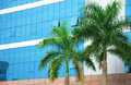 Office building and palm in front the blue Royalty Free Stock Photos
