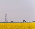 Oil and gas well rig outlined rural canola field on on an overcast day Royalty Free Stock Photography