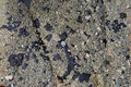Oil globs tar balls on beach rocks in laguna beach california image shows conglomerate the source of these or Royalty Free Stock Image