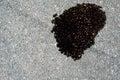 Oil leak on the asphalt in city Stock Image