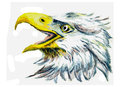 Oil painting bird eagle head on paper Royalty Free Stock Image