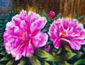 Oil Painting - Blooming Peony Royalty Free Stock Images