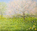 Oil painting canvas springtime natural landscape blooming trees colorful meadow full daffodils Royalty Free Stock Photo