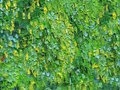 Oil painting on canvas. Summer green foliage