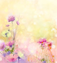 Oil painting nature grass flowers. Hand paint close up pink cosmos flower, pastel floral and shallow depth of field
