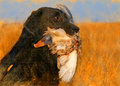Oil painting portrait of black labrador with duck Royalty Free Stock Photo