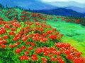 Oil Painting - Wild Flower Stock Image